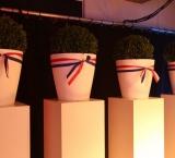 Delta Lloyd 2012 - Foto 2 - Bolbuxus in witte pot