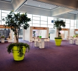 Workshop XL - Foto 1 - Ficusbomen in bloomspot